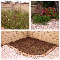 My Garden: A Before & After in Progress
